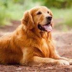 حقائق علمية عن الكلاب